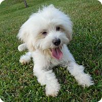 Adopt A Pet :: Zoe Zoe - Hazard, KY