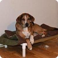 Adopt A Pet :: Lou - Bakersville, NC