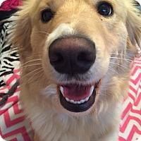 Adopt A Pet :: Dixiee - Alpharetta, GA