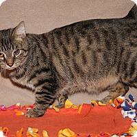Adopt A Pet :: Sammy (Neutered) - New Photos - Marietta, OH