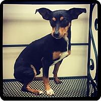 Adopt A Pet :: Konah - Grand Bay, AL