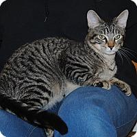 Adopt A Pet :: Reese - Parsons, KS