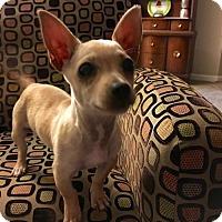 Adopt A Pet :: Babette - Fresno, CA