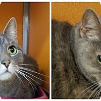 Adopt A Pet :: Sissy - Elyria, OH