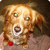 Adopt A Pet :: Stimpy - Kalamazoo, MI