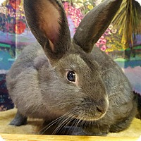 Adopt A Pet :: Baron - Foster, RI
