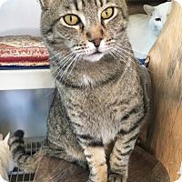 Adopt A Pet :: Seamus - Gilbert, AZ