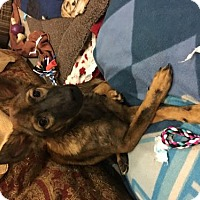 Adopt A Pet :: 'BLOSSOM' - Agoura Hills, CA