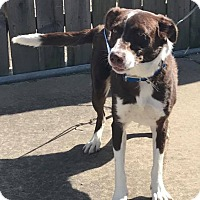 Adopt A Pet :: Gilda - Garden City, MI