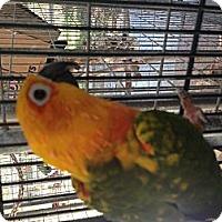 Adopt A Pet :: CB - Punta Gorda, FL