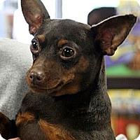 Adopt A Pet :: Brynne - South Amboy, NJ