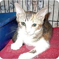 Adopt A Pet :: Xingy - Colmar, PA