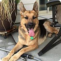 Adopt A Pet :: Tali - Seattle, WA