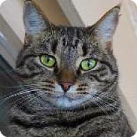 Adopt A Pet :: MACIE GRAY - Decatur, GA