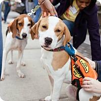 Adopt A Pet :: Samantha Jones - Brooklyn, NY
