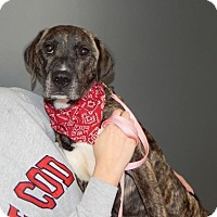 Adopt A Pet :: Penelope - Sparta, NJ