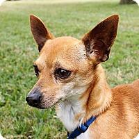 Adopt A Pet :: Poncho - Hearne, TX