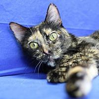 Adopt A Pet :: Monet - Winston-Salem, NC