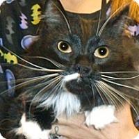 Adopt A Pet :: Dexter - Wildomar, CA