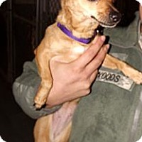 Adopt A Pet :: Lillith - Fort Riley, KS