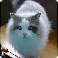 Adopt A Pet :: Spencer and Norm - Keizer, OR