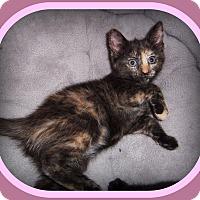 Adopt A Pet :: BRIANA - SUCH A SWEETHEART!! - South Plainfield, NJ