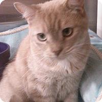 Adopt A Pet :: Milo - Lawrenceville, GA