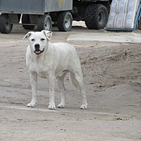 Adopt A Pet :: Slate - Pie Town, NM