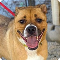 Adopt A Pet :: OAKLEY - Decatur, GA