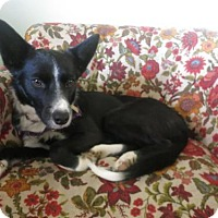 Adopt A Pet :: Stella (Courtesy Listing from Tremont, IL) - Plymouth, IN