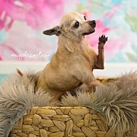 Adopt A Pet :: Judy - Burlington, NC
