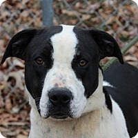 Adopt A Pet :: Patsy - Harrisonburg, VA