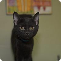 Adopt A Pet :: Michael - Medina, OH