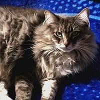 Adopt A Pet :: Julia - Calimesa, CA