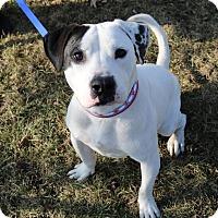 Adopt A Pet :: Nemo - Warrenville, IL