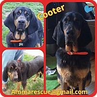 Adopt A Pet :: Cooter - Dunmore, WV