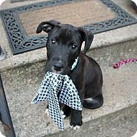 Adopt A Pet :: Patrick-Pending! - Detroit, MI