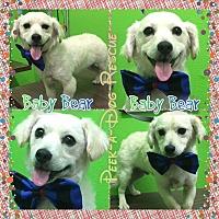 Adopt A Pet :: Baby Bear - South Gate, CA