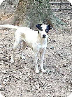 Cattle Dog Mix Dog for adoption in Albemarle, North Carolina - Petey