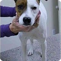 Adopt A Pet :: Dora in Houston - Houston, TX