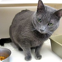 Adopt A Pet :: Topper - Ludington, MI