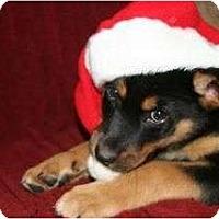 Adopt A Pet :: Buddy - Surrey, BC