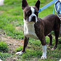 Adopt A Pet :: Buster - Tinton Falls, NJ