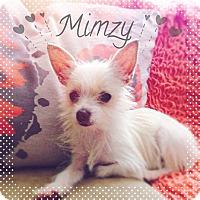 Adopt A Pet :: Mimzy - Phoenix, AZ