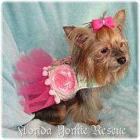 Adopt A Pet :: Taylor - Palm City, FL