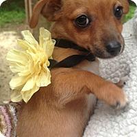 Adopt A Pet :: Camila Cerise - Foster, RI