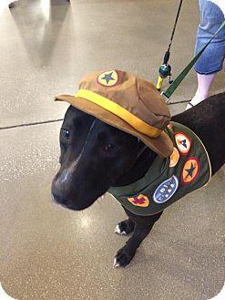 Labrador Retriever/Retriever (Unknown Type) Mix Dog for adoption in Lebanon, Connecticut - Emerson