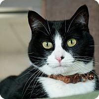 Adopt A Pet :: Daisy - Coronado, CA