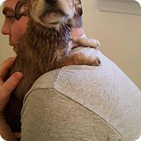 Adopt A Pet :: Quinn - Halethorpe, MD