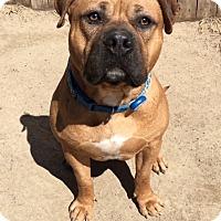 Adopt A Pet :: Haze - Mt Vernon, NY